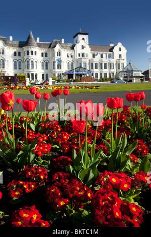 Tulips in flower along Southport Promenade, UK - Stock Photo