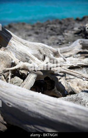 Driftwood washed up on the beach at Man O War Cay, in the Abacos, Bahamas. - Stock Photo