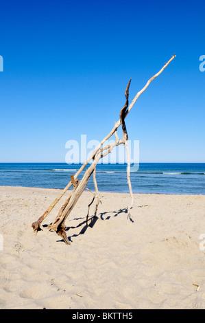 Driftwood branches on Coast Guard Beach, Cape Cod National Seashore, Eastham, Massachusetts - Stock Photo