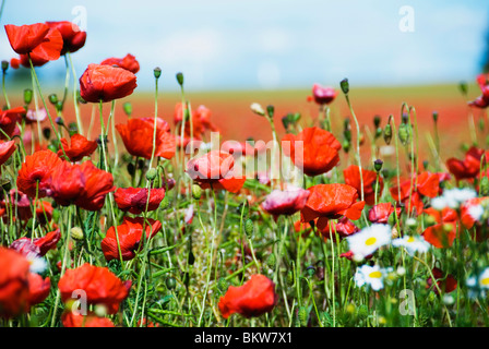 A lot of flowers - Stock Photo
