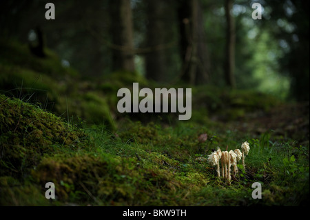Mushrooms in the wood - Stock Photo