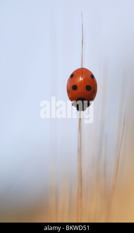 Red with dots - Stock Photo