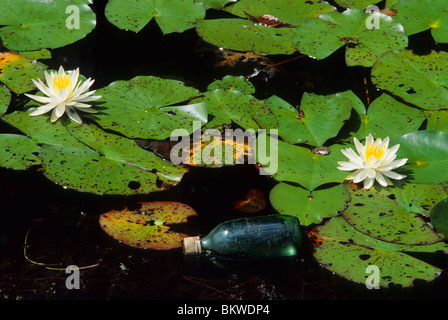 Water Pollution discarded bottle  floating next to Fragrant water lilies Nymphaea odorata Southeastern USA - Stock Photo