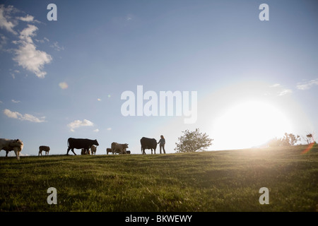 View over meadow with cows - Stock Photo