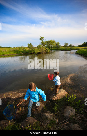 Two children search for frogs in a pond on a farm in Ipswich, Massachusetts. - Stock Photo