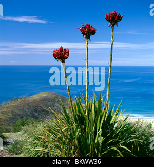 Small bird perched on Gymea Lily at Governor Game Lookout, Garie Beach, Royal National Park, New South Wales, Australia - Stock Photo