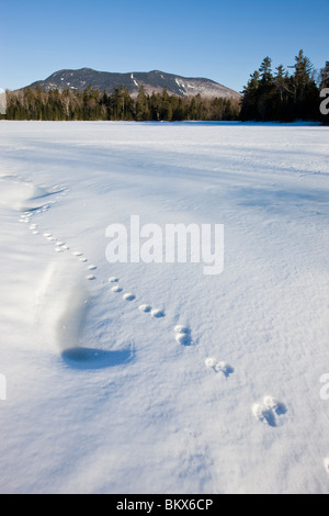 Animal tracks on a frozen pond near Little Lyford Pond Camps near Greenville, Maine, Winter.  Baker Mountain is - Stock Photo