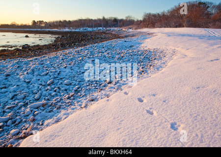 Canine tracks in fresh snow on the New Hampshire coast in Odiorne State Park in Rye, New Hampshire.  Winter. - Stock Photo