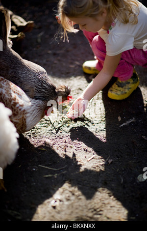Young girl feeding chickens - Stock Photo