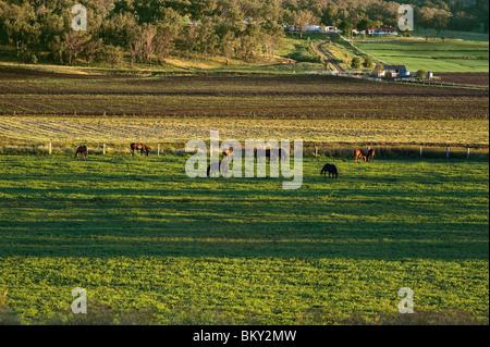 Farmland - Darling Downs - Stock Photo