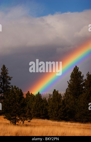 Rainbow over the grass, hills and trees of Blue Mountain, Missoula, Montana - Stock Photo