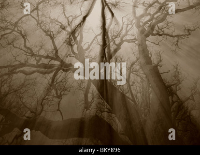 Sepie toned abstracted oak forest in winter, Rygge, Norway. - Stock Photo