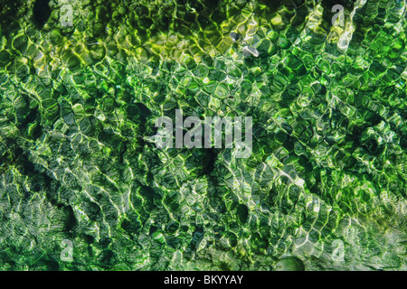 hot springs stream with vibrant emerald and green algae and ripples - Stock Photo