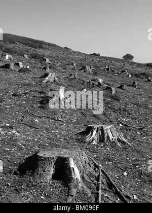 Tree stumps in an open field - Stock Photo