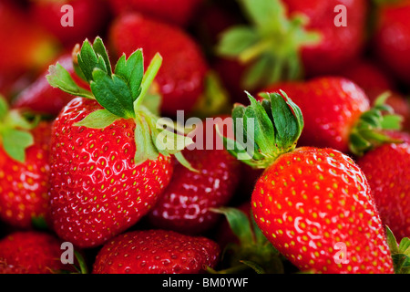 ripe red strawberries with stems and leaves - Stock Photo