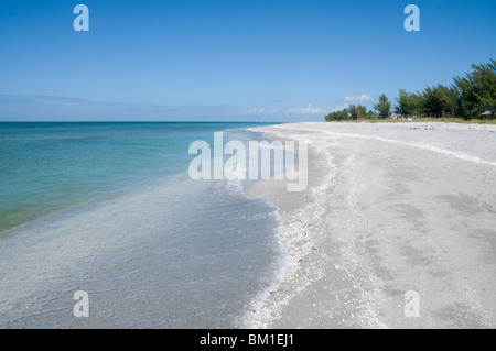 Beach covered in shells, Captiva Island, Gulf Coast, Florida, United States of America, North America - Stock Photo