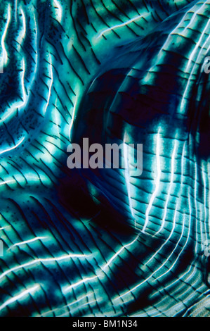 Giant Clam Mantle Macro Tridacna gigas Indo-Pacific - Stock Photo