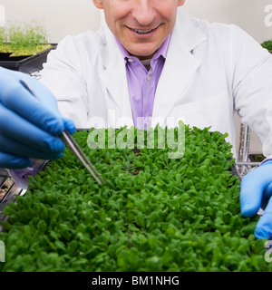 Scientist researching on plants in a laboratory - Stock Photo
