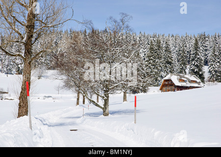 The Black Forest in winter, near Schoenwald, Baden-Wurttemberg, Germany, Europe - Stock Photo