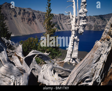 Trees on the rim of a crater, Crater Lake, Crater Lake National Park, Oregon, USA - Stock Photo