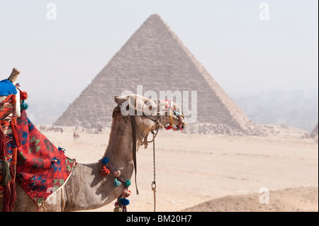 Camel in front of Pyramid, Giza, UNESCO World Heritage Site, near Cairo, Egypt, North Africa, Africa - Stock Photo