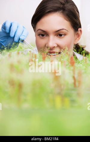 Female scientist researching on plants in a laboratory - Stock Photo