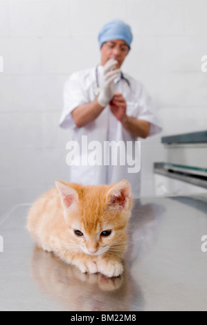Cat sitting with a vet in the background - Stock Photo
