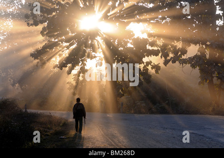 Man walking along a street with sun rays shining through a tree, Highlands, Myanmar (Burma) - Stock Photo