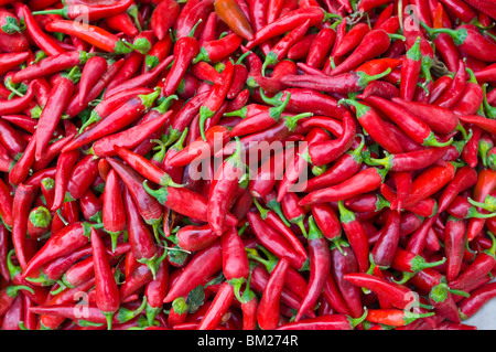 Close-up of red chilies in Nahaufnahme, Osh, Kyrgyzstan, Central Asia - Stock Photo