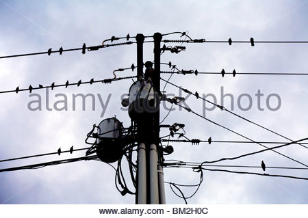 Sihlouettes of birds perched on utility wires. Kansas, United States. - Stock Photo