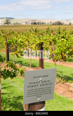 The vines at Jacob's Creek winery in the Barossa Valley in South Australia - Stock Photo