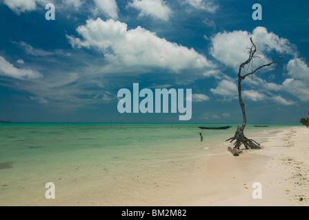 Leafless tree on a beautiful deserted beach, Havelock Island, Andaman Islands, India, Indian Ocean - Stock Photo