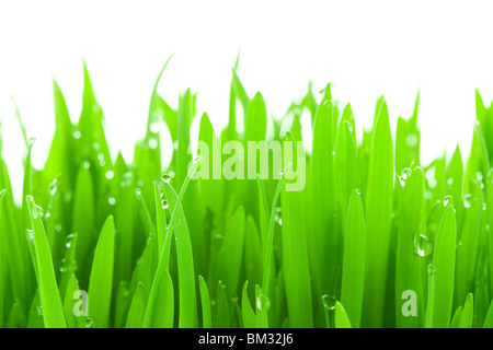 Water drops on grass, close up, white background - Stock Photo