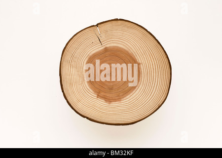 Cross section of log, white background