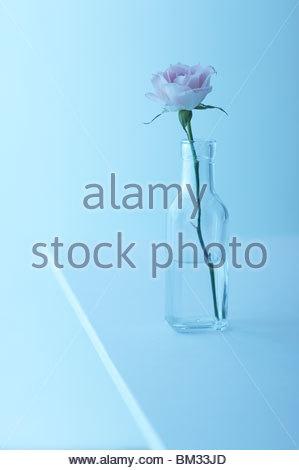 Single rose in glass bottle, blue background - Stock Photo