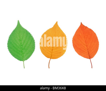 Colored leaves, white background - Stock Photo