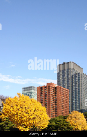 Office buildings and ginkgo trees, copy space, Tokyo prefecture, Japan - Stock Photo