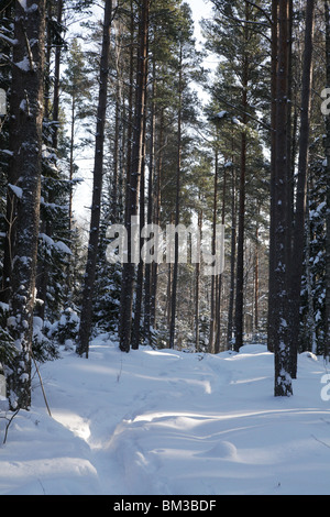 Path track through snow covered forest near Godby on land Aland archipelago between Finland Sweden Winter - Stock Photo