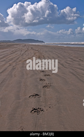 This seascape photo shows horse hoof prints walking into the mountain distance on a sandy beach Long Beach, Wa. - Stock Photo