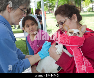 Humane Society Vaccination Clinic for Pets of Low-Income People - Stock Photo