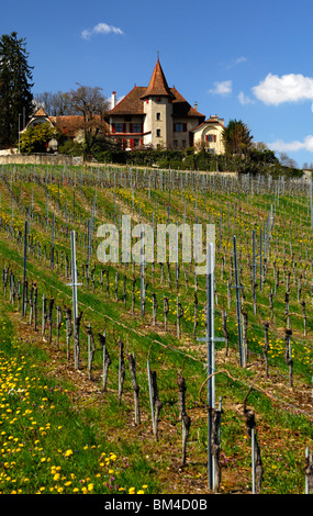 Vinyard for Chasselas grapes at the foot of the Jura mountain range in springtime, Begnins, Vaud, Switzerland - Stock Photo