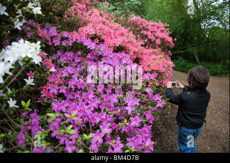 A young boy photographing the Azaleas in the Isabella Plantation, Richmond Park, UK 2010 - Stock Photo