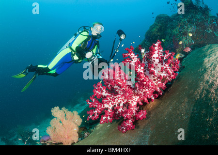 Scuba Diver and red Soft Coral, Dendronephthya sp., Raja Ampat, West Papua, Indonesia - Stock Photo