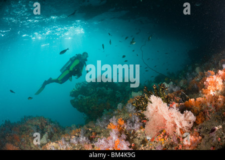 Colorful Soft Corals in Grotto, Raja Ampat, West Papua, Indonesia - Stock Photo