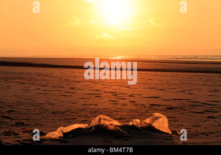 Waste Rubbish on Sandy Beach at Sunset,Juist Germany - Stock Photo