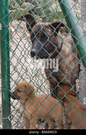 Refuge Dogs behind a fence in a shelter - Stock Photo