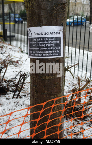 Notice on a tree marking a Japanese Knotweed (Fallopia japonica) control site in Merseyside, England, UK - Stock Photo