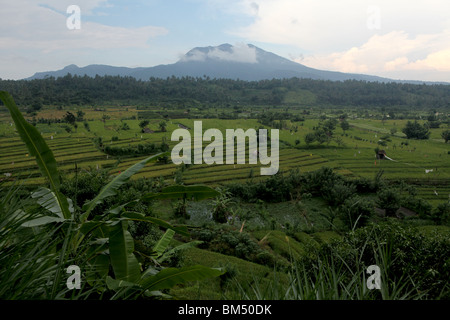 Terraced rice fields near Tirtagangga with the volcanic peak of Gunung Lempuyang on the horizon in Bali, Indonesia. - Stock Photo