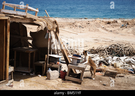 Poor hut on polluted beach Red Sea, Hurghada, Egypt - Stock Photo