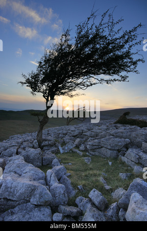 Sunset at Twistleton Scars, Ribblesdale in The Yorkshire Dales, North Yorkshire, England, UK - Stock Photo